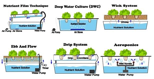 Tipos de Sistemas de Hidroponia