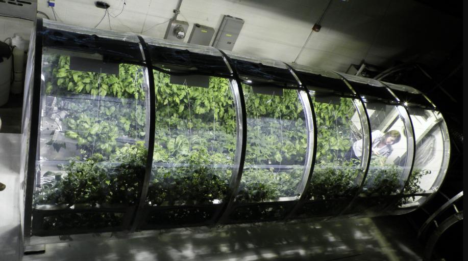 Estufas lunares projetadas para imitar as plantações da Terra - NASA