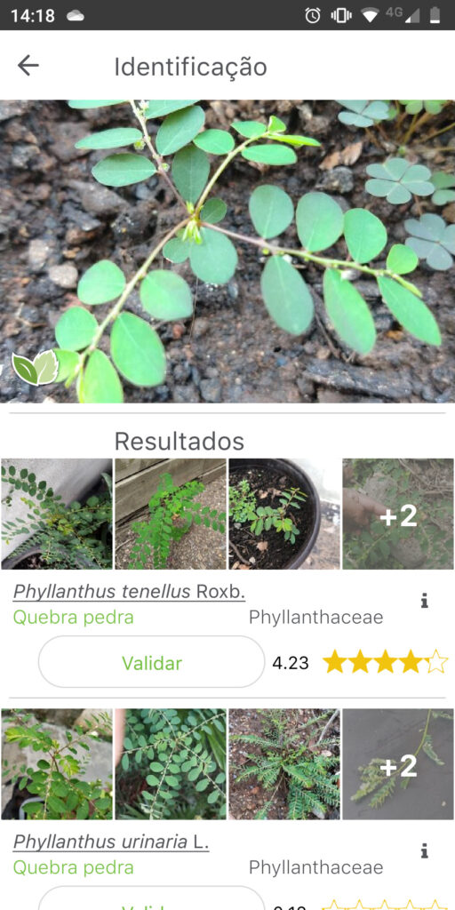 PlantNet identificar planta