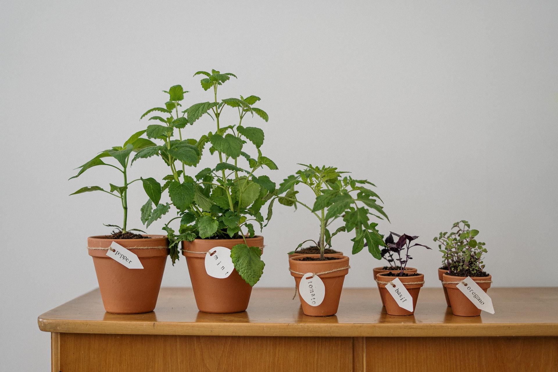 ¿Cómo saber qué especie de planta por foto?
